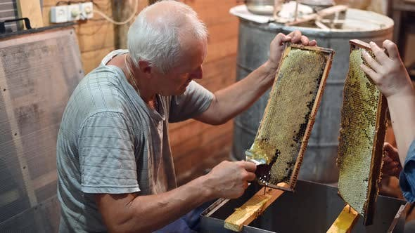 Beekeeper Unseals Honeycomb with a Scraper To Remove Wax and Subtract Honey