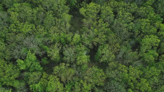 Thumbnail for Forest Landscape From Above Green Lush Tree Crowns