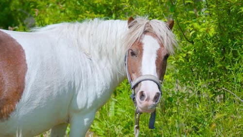 Pony in Front of the Green Bushes