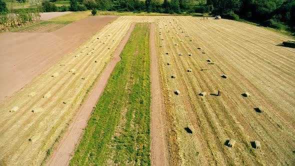 Thumbnail for Agricultural Field