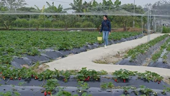 Thumbnail for Woman tourist visit strawberry farm