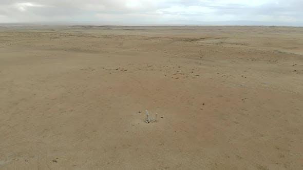Reindeer Stones Stele in the Desert