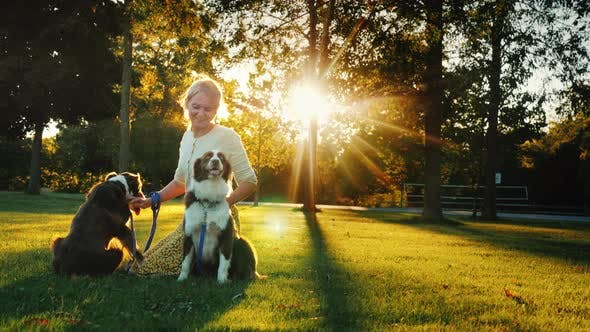 Thumbnail for Portrait of a Happy Owner of Two Dogs Playing with Pets in the Park, the Sun Beautifully Illuminates