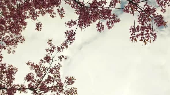 Thumbnail for Tree in Sun Sky