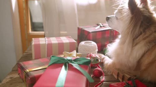 Flatlay Christmas01546014