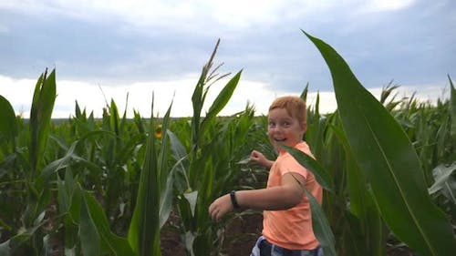 Happy Small Red-haired Boy Running Through Corn Field, Turning To Camera and Smiling. Cute Little