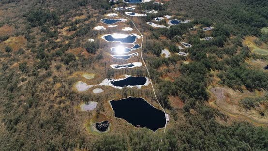 Forest Lakes And Bogs