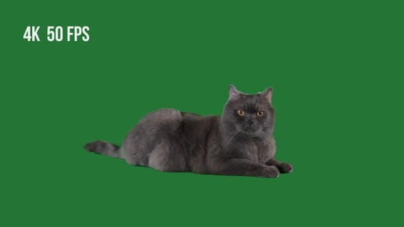 Home Cat On Green Background