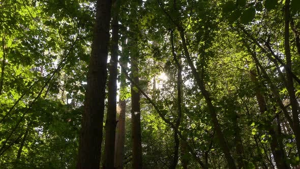 Thumbnail for Beautiful Green Wild Forest at Sunny Day, Panoramic Shoot