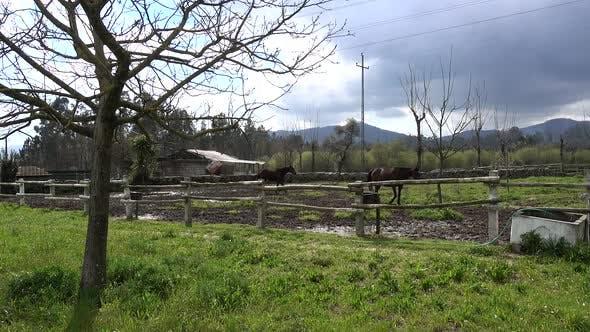 Thumbnail for Farmland