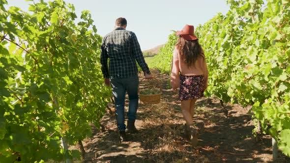 Thumbnail for Paar Wandern in einem Weinberg mit ein Korb von Trauben