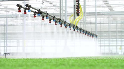 Agriculture Farm Plant Hydroponic View of Automatic Watering of Green in Greenhouse Technology Spbd