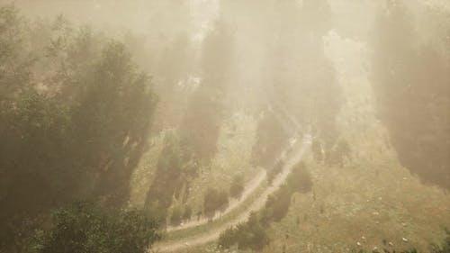 Dirt Road Through Deciduous Forest in Fog