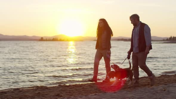 Thumbnail for Man and Woman Walking with Dogs along Lakeshore at Sunset