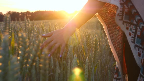 Thumbnail for Woman Hand Touching Wheat Ears In Cereal Field
