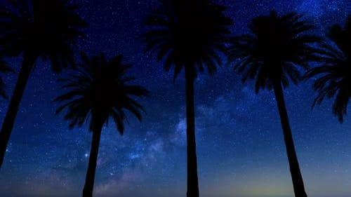 Driving Under Palm Trees With Milky Way