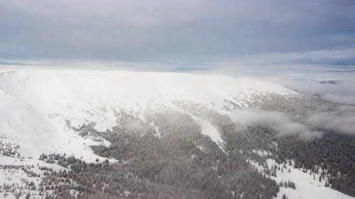 Beautiful Mountain Day, Cloudy Winter Fir-tree