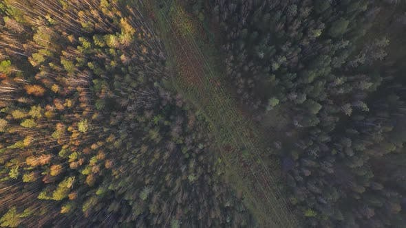 Thumbnail for Aerial Top Down View at Autumn Forest