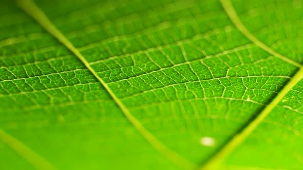 Thumbnail for Green Leaf in Nature