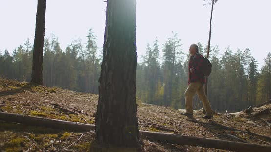 Thumbnail for Hiker Is Walking Up in Forest and Looking at Picturesque Landscape of Woodland and River at Sunny