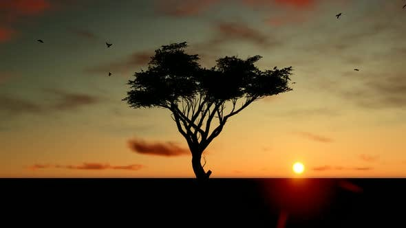 Thumbnail for Sunset Tree Landscape and Time-Lapse Sky