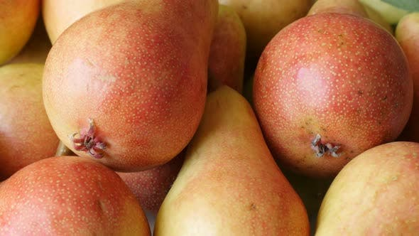 Thumbnail for Common European pear fruit pile  4K 2160p 30fps UltraHD tilting footage - Slow tilt on Rosaceae Pyru