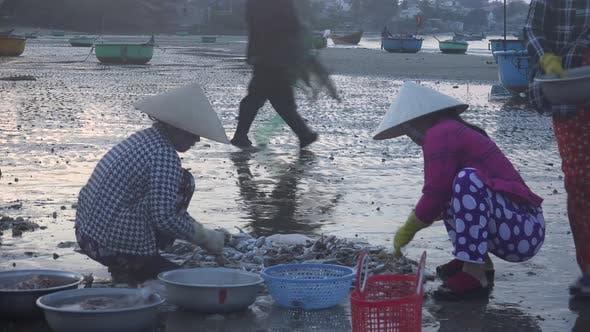 Thumbnail for Sea Food Market