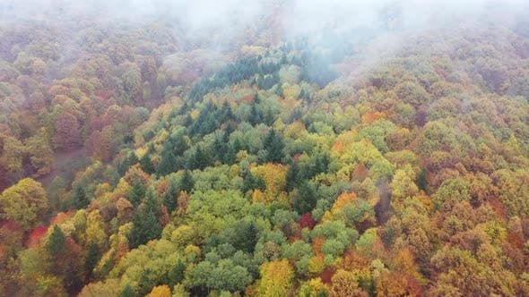 Forest In Autumn Aerial Images