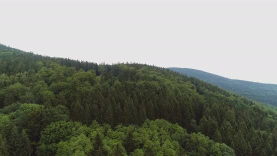 Thumbnail for Beautiful View of Forest From Above