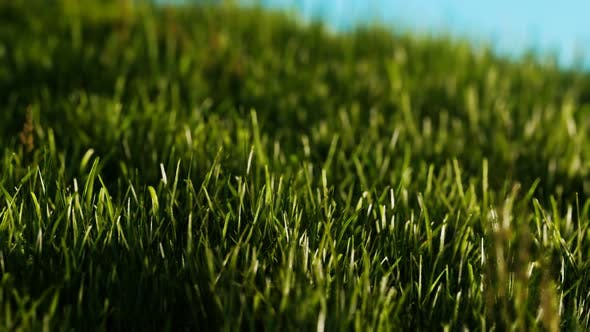 Thumbnail for Green Fresh Grass As a Nice Background