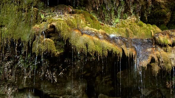 Moss And The Water Drops 1
