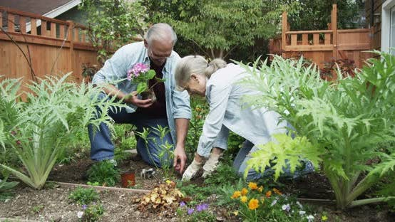 Thumbnail for Senior couple in the yard gardening