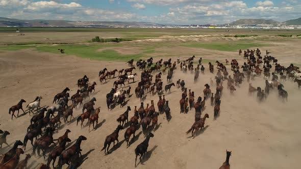 Thumbnail for Horses Running