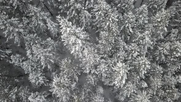 Aerial view rising above snow covered forest