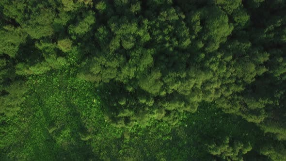 Thumbnail for Flying Over Green Woods