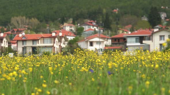 Thumbnail for Yellow Flowers Fields Near the Countryside Rural Houses