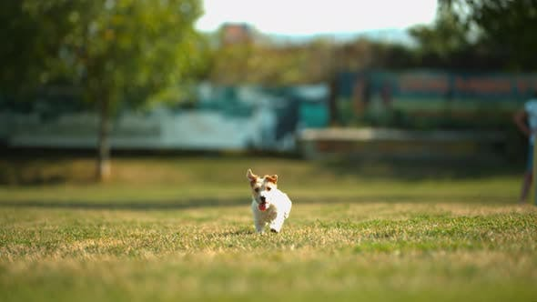Thumbnail for Dog running, Ultra Slow Motion