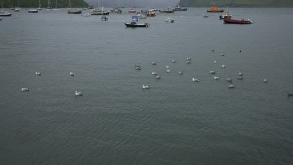 Thumbnail for Birds and anchored boats in a harbor