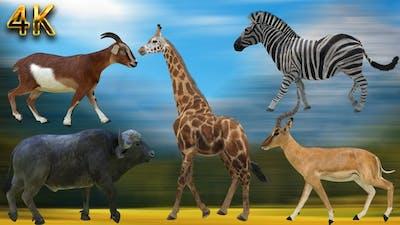 5 Animals Walking Pack