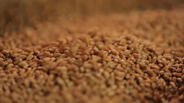 Thumbnail for Background shot of grain dropping in pile at farm storage, wheat export quotas
