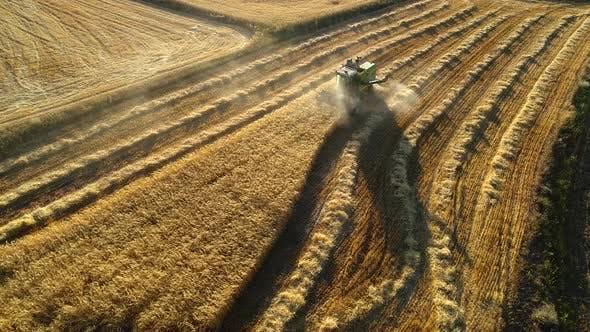Thumbnail for Wheat Harvest
