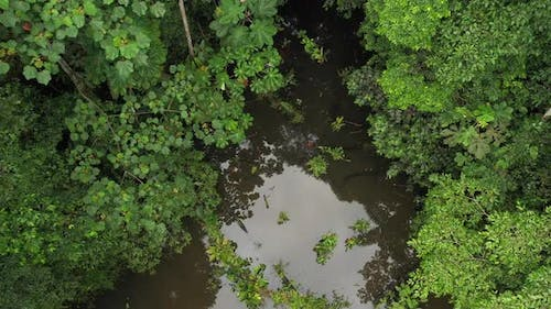 Showing a inlet of a river in a tropical rainforest in ecuador south america