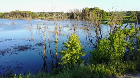 Thumbnail for Dead Trees in the Reservoir