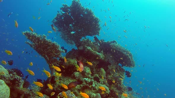 Cover Image for Underwater Table Corals