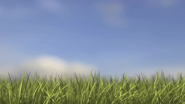Thumbnail for Grass Growing Time-Lapse