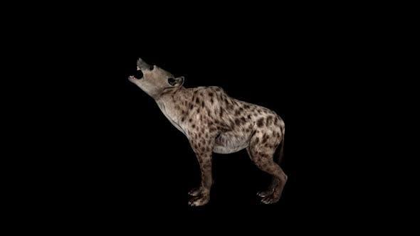 Hyena Howl