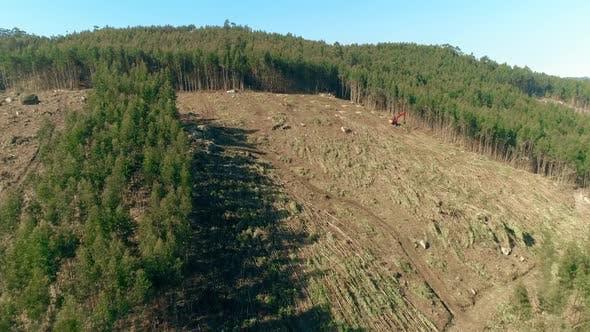 Deforestation Global Warming