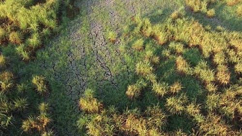 Move over dry crack wetland
