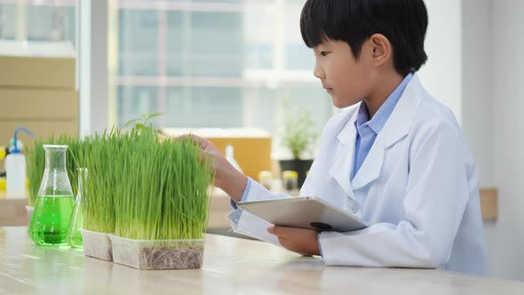 Thumbnail for Asian student boy observation chlorophyll and experiment photosynthesis of plant in the laboratory.