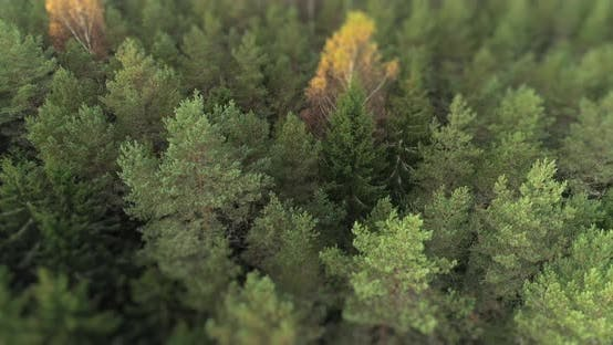 Thumbnail for Aerial Forest in Autumn with Tilt Shift Effect